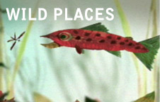 wildPlaces_updated